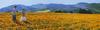 Кодак Колорама  двух фигур на маковом поле вблизи Ломроса. Калифорния
