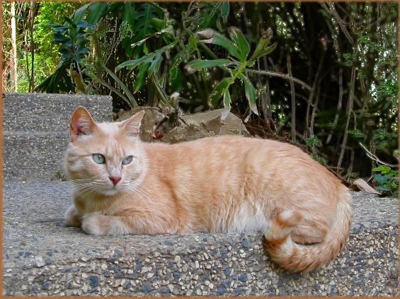 Кот во весь рост картинки