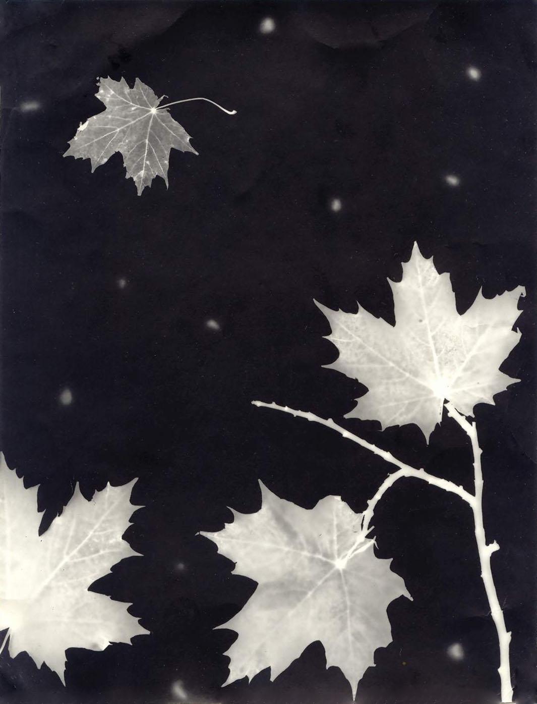 Картинки осень черно-белая