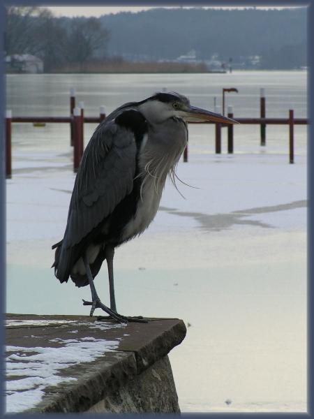 Зимующая птица.