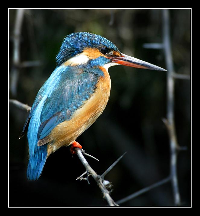 ...в рубрике: фото красная птица и водоплавающие птицы.