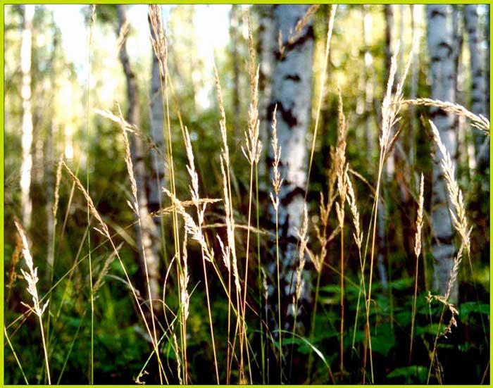 Харьзба в лесу 3 фотография