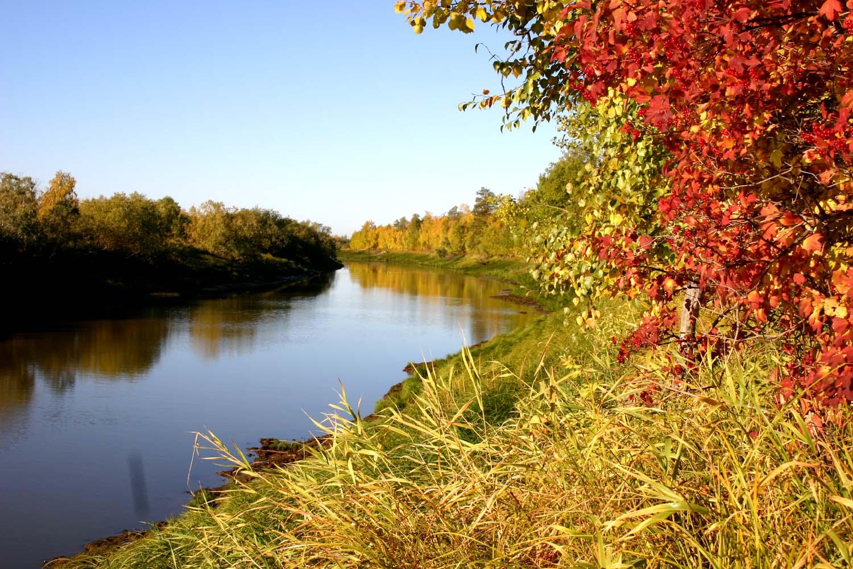 Фото природа западной сибири летом 3