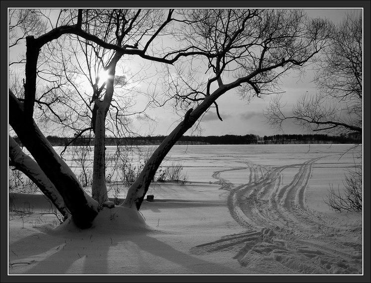 фото: Черно-белая зимняя картинка фотограф: Сергей Чубаров WWW.PHOTODOM.COM.
