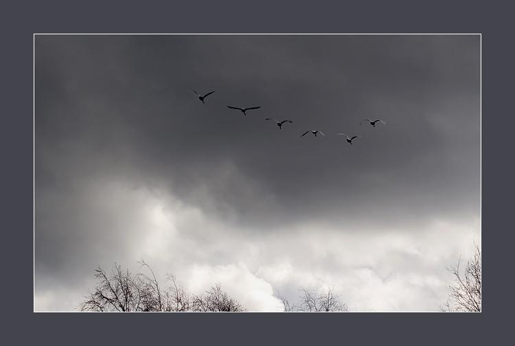 VVV.RU Фотографии Лучшие фотографии Летят перелётные птицы.