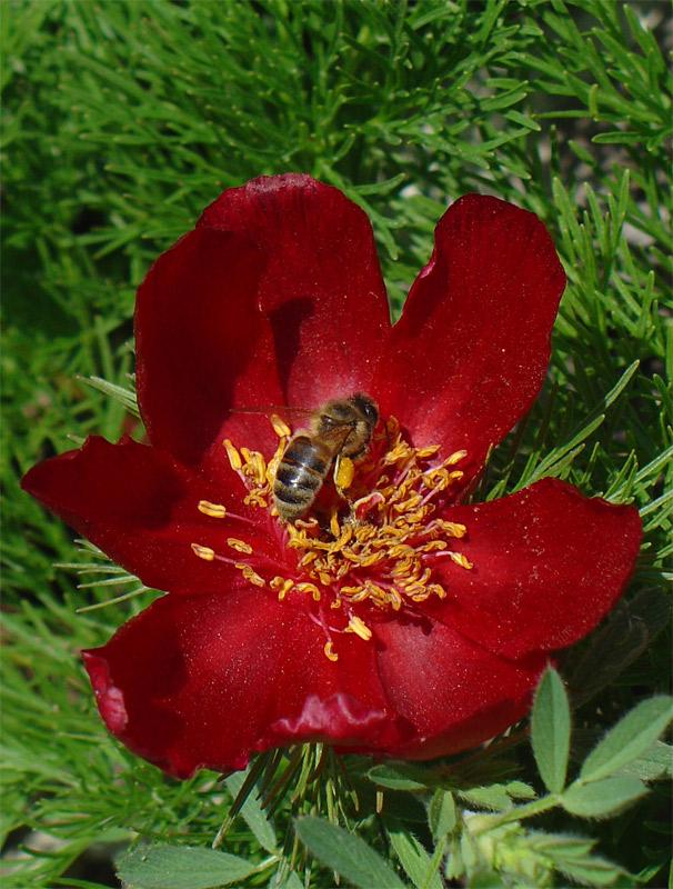 Цветы занесенные в красную книгу