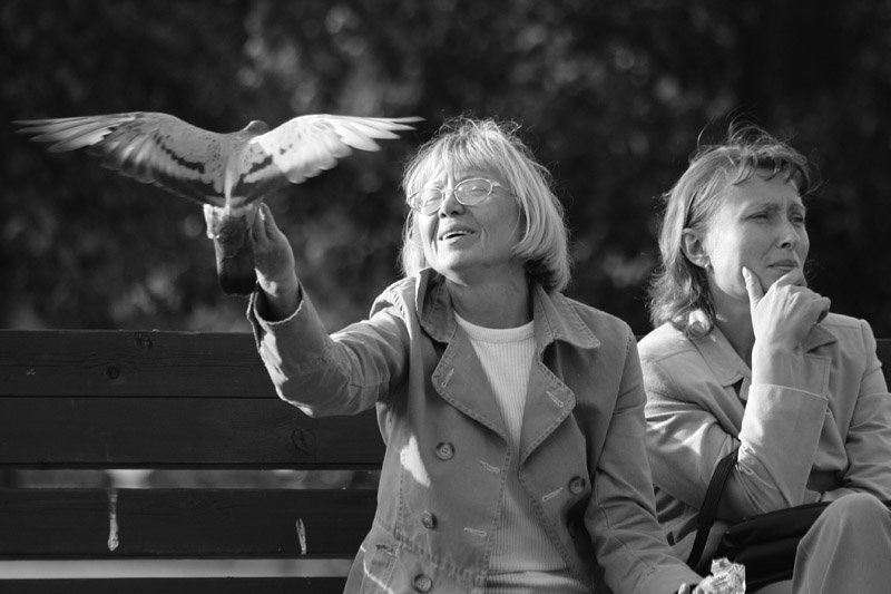 клуб знакомств любовь и голуби