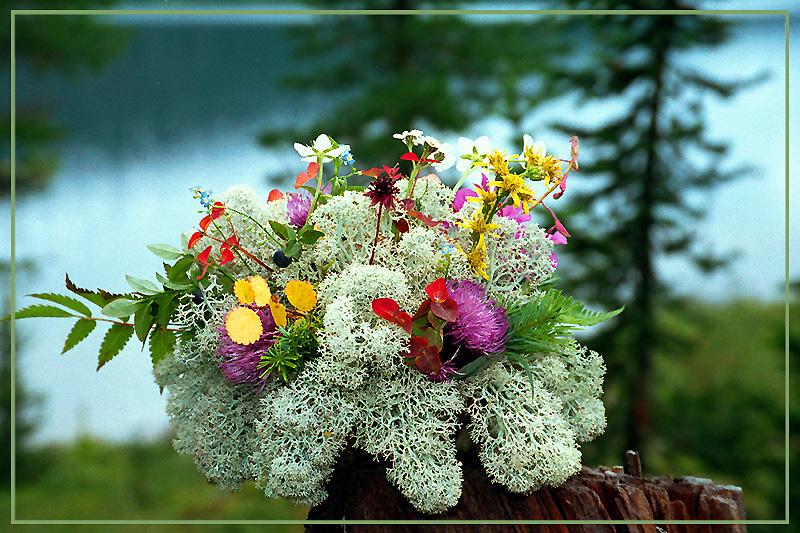 букет лесных цветов фото