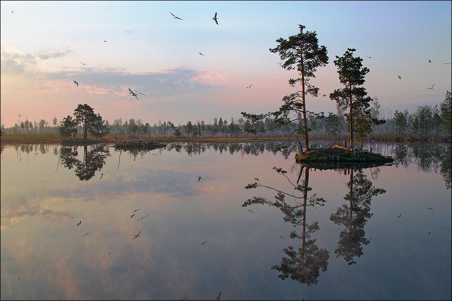 http://club.foto.ru/gallery/images/photo/2006/05/11/613987.jpg