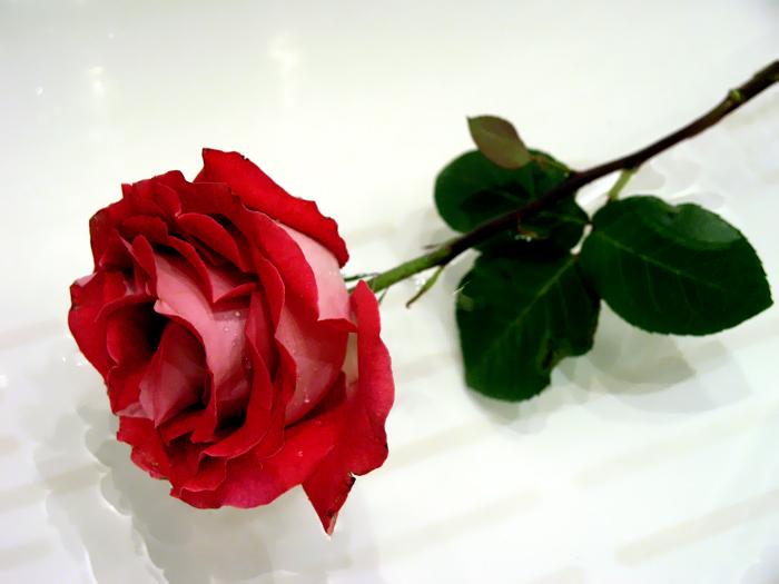 Самые простые розы