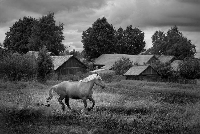 LizardKing.  Серия.  Летняя черно-белая деревенская картинка про коня.