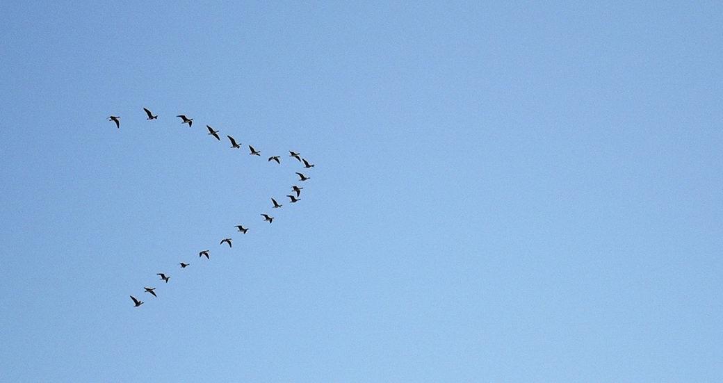 бесплатная птицы летят косяком картинка чудесный вариант шапочки