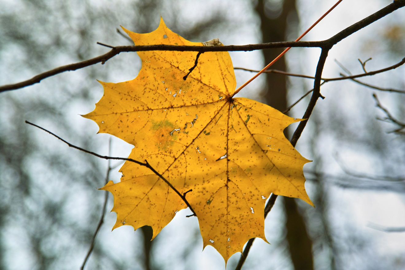 потолок последний день осени фото именно новый год