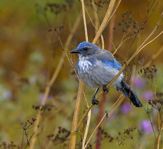 Приветствую вас, юные друзья птиц.  Как давно вы были в лесу и наблюдали за птицами.  Расскажите об этом.