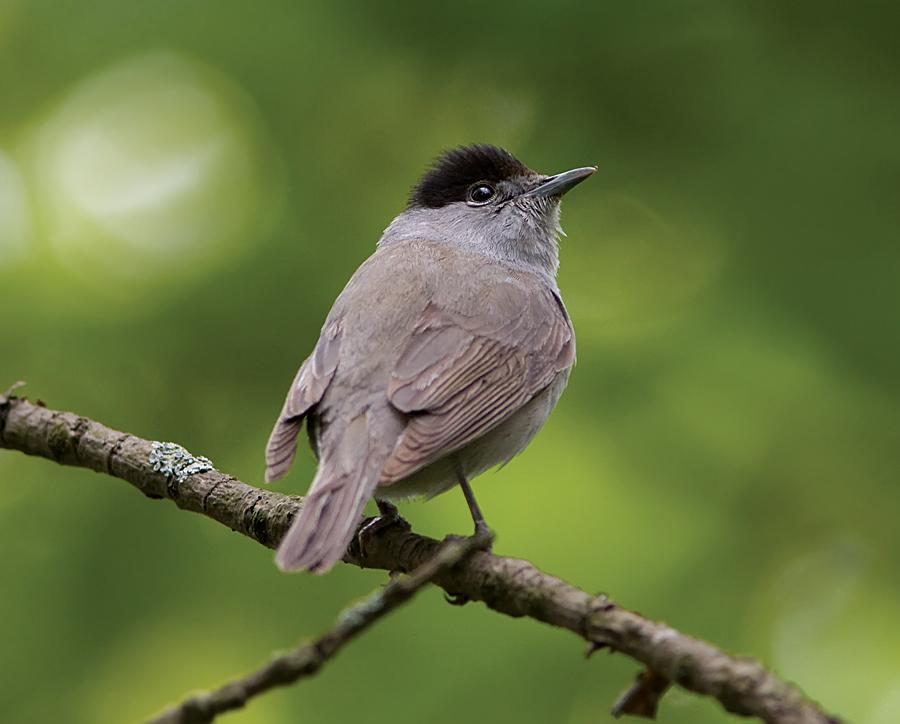 Пение птиц и музыкальные инструменты