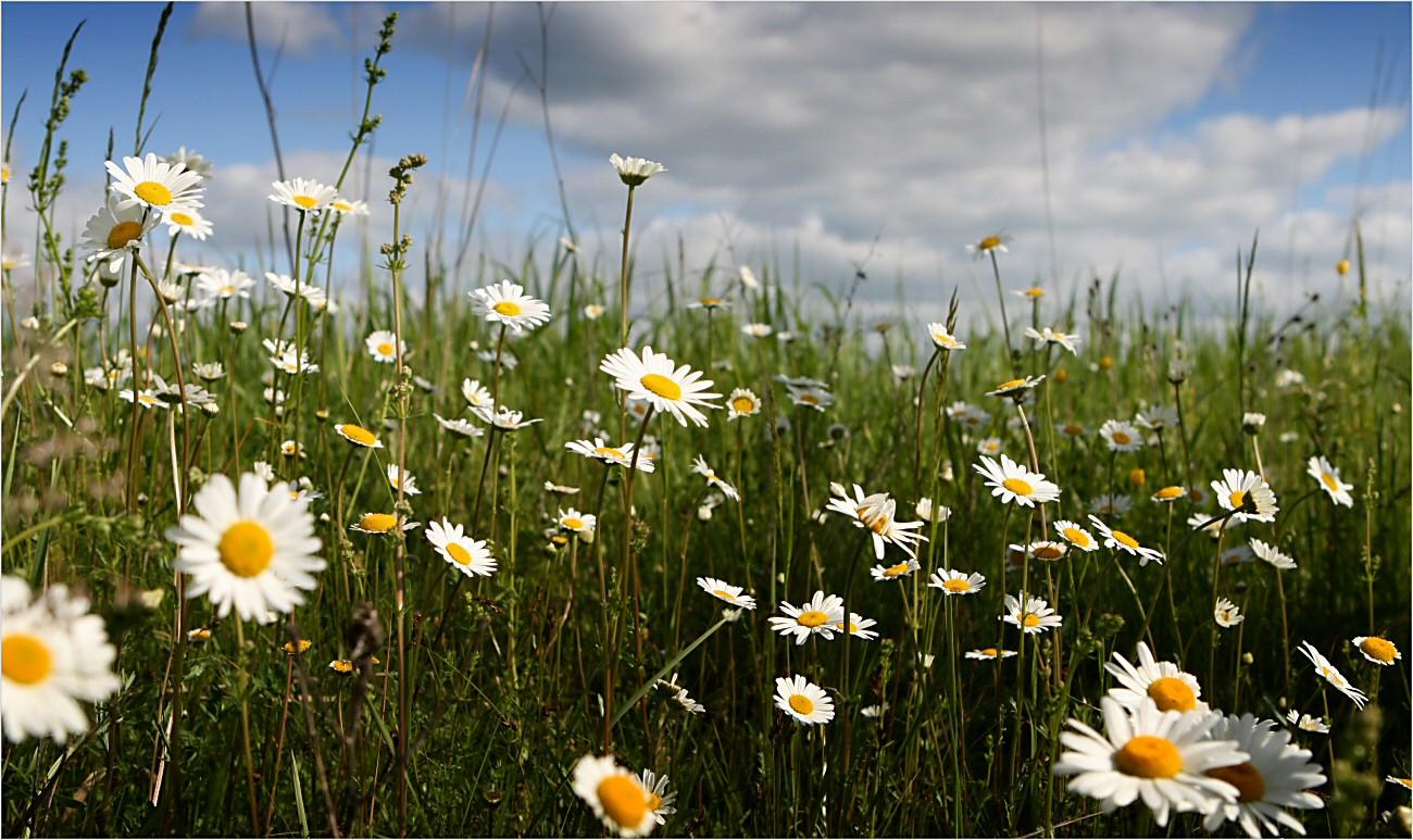 Картинки с летней природой