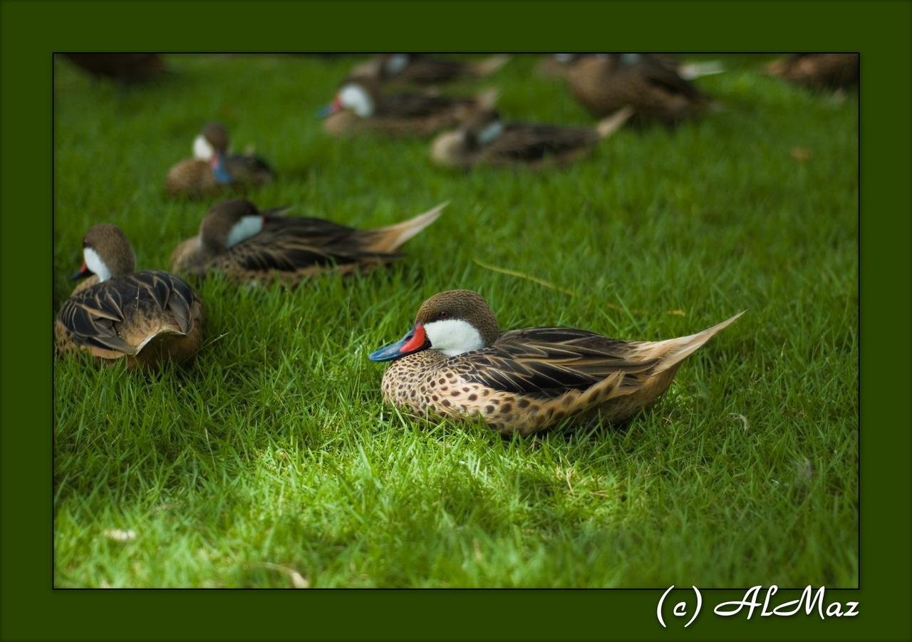 фото и названия птиц доминиканы - В ...: atcm.pp.ua/foto-i-nazvaniya-ptits-dominikany.html