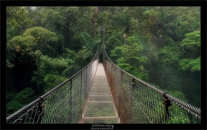 Подвесной мост под дождем (hanging bridge) Аренал Коста-Рика фото
