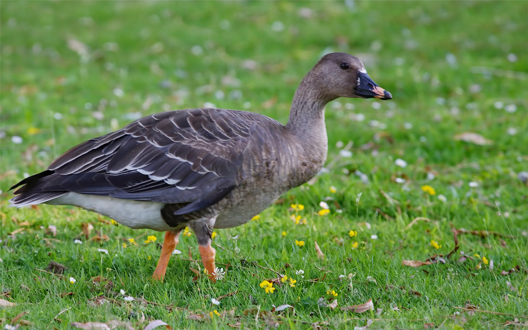 Северные виды птиц все чаще зимуют в теплых странах наподобие Израиля.