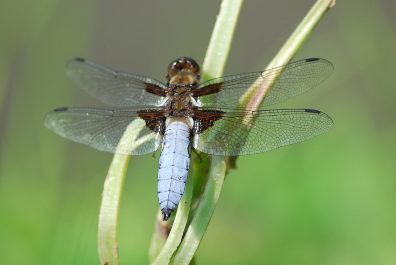 Поиск насекомого по фотографии