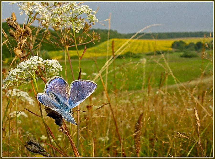 фото природа август