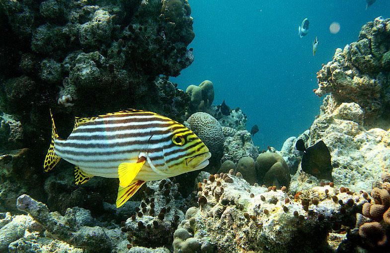 теплицы рыбы атлантического океана фото лишь несколько