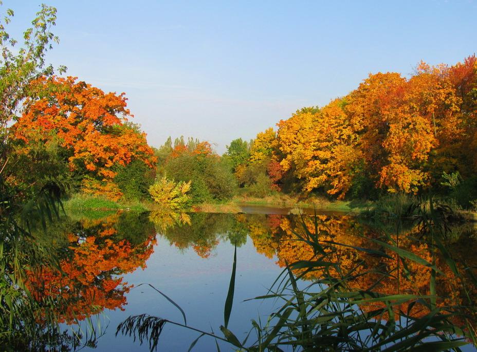 Сообщения по теме осень в блогах пользователей Rambler, стра…