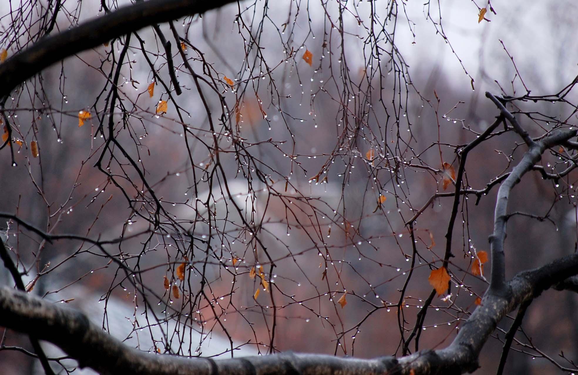 скачать песню дождь осенний дождь