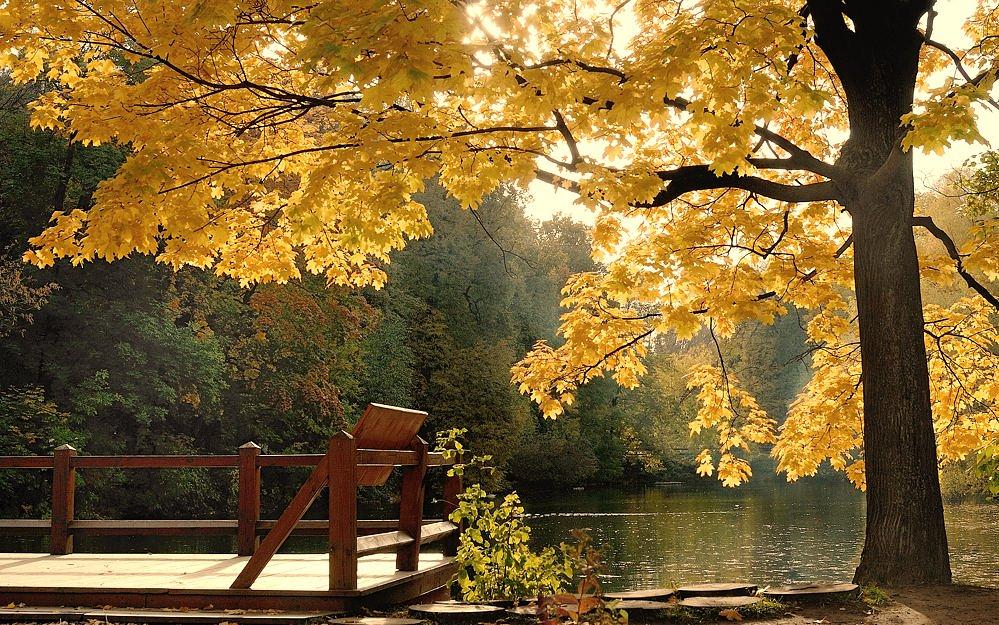 http://club.foto.ru/gallery/images/photo/2008/12/05/1240177.jpg