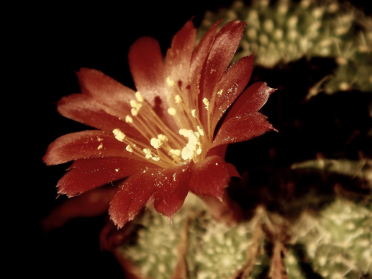 Картинки фотографии с розами красивыми букетами того, что