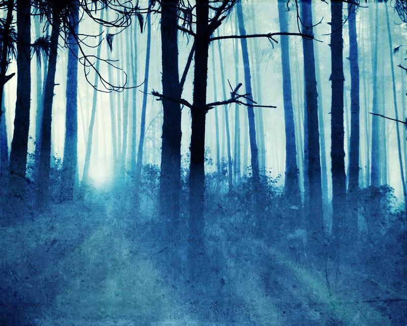 Туманный Лес 1317632