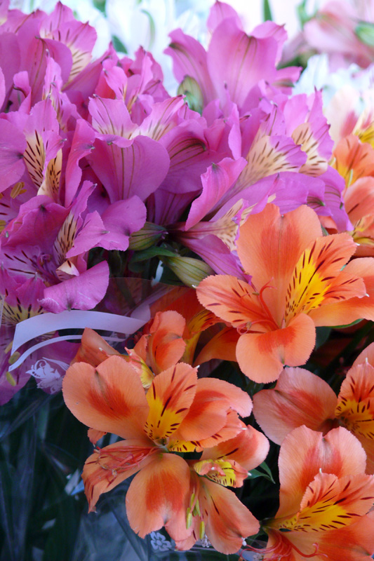 цветок дикая орхидея. фото