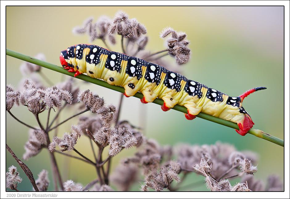 Фотография Сейчас высплюсь и за еду! из раздела макро 3393568 - фото.сайт - Photosight.ru