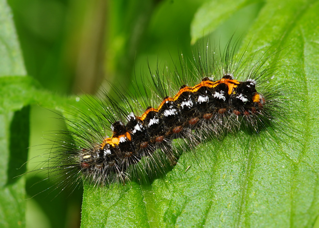 вид гусеница с хвостиком фото освоения всех