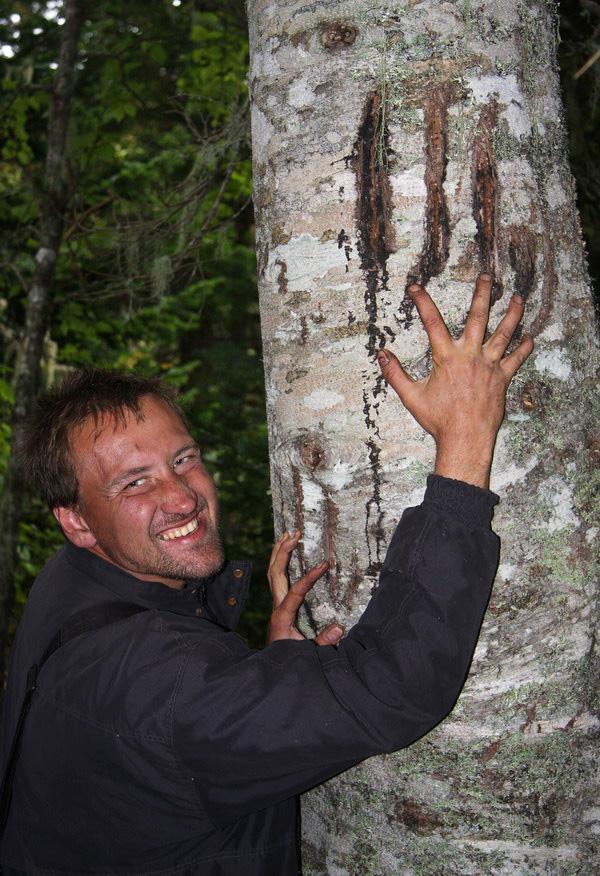 фото меток медведей на деревьях еще