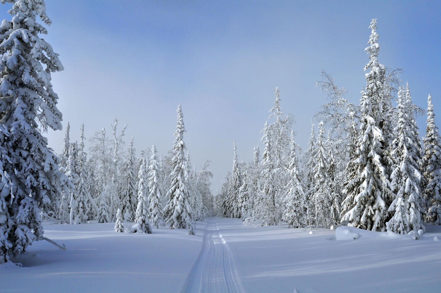 поляна в лесу зимой картинки компания располагает множеством