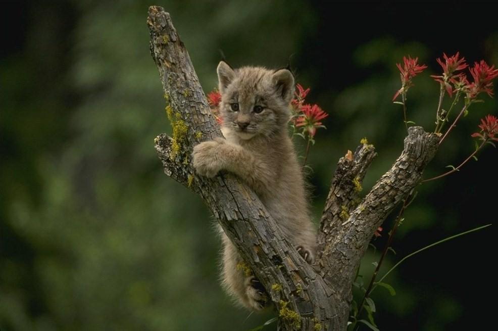Фотографии животных1205 - Информационный портал Таджикистана - Главные новости Таджикистана