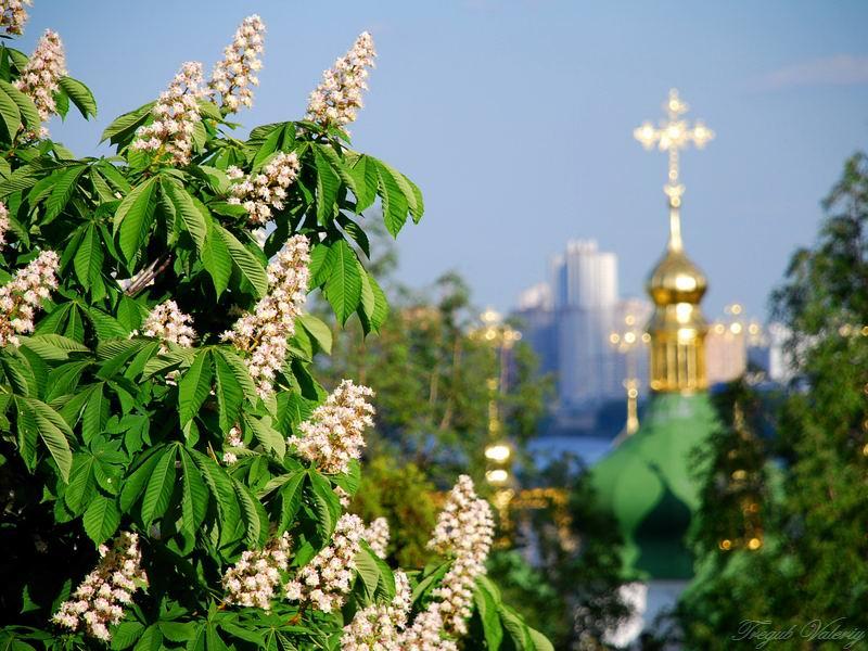 Квітка Душа Ніна Матвієнко