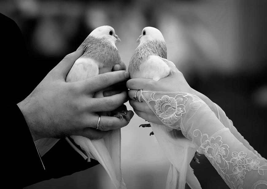 Днем, свадебные картинки с голубями красивые