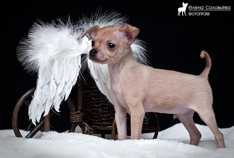Ангел на отдыхе (S. Elena) .