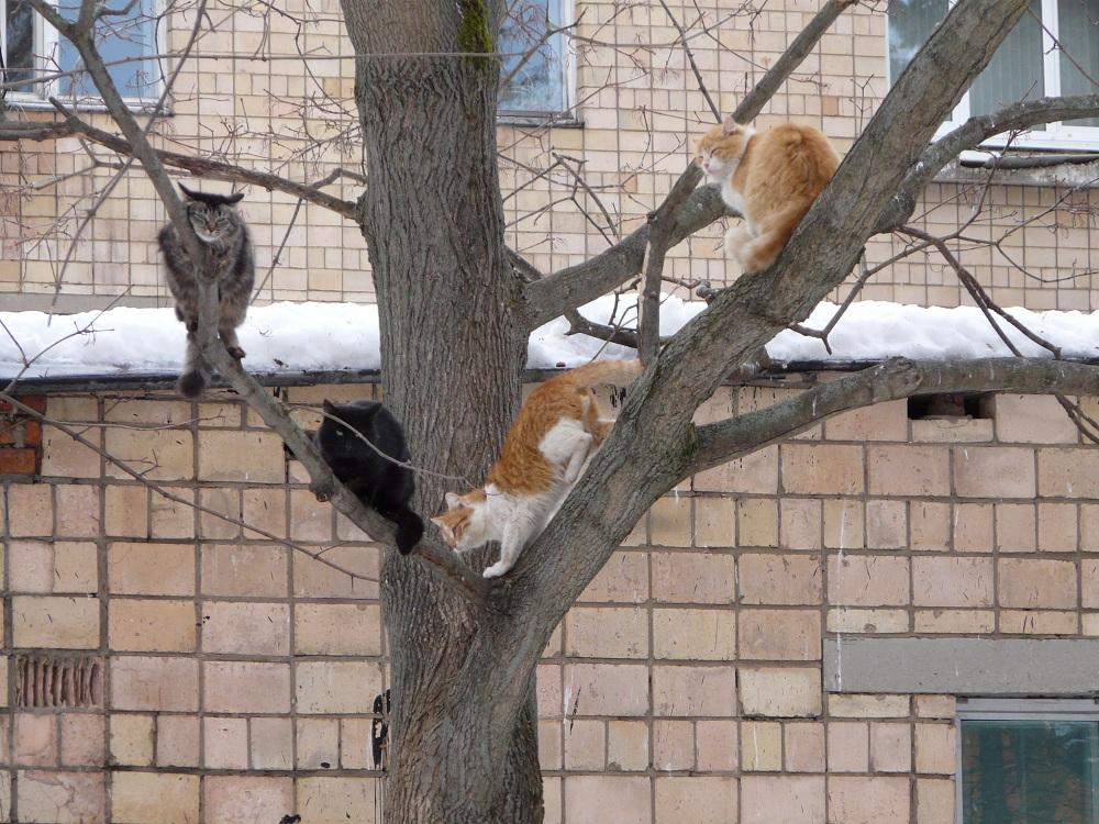 Картинка коты прилетели