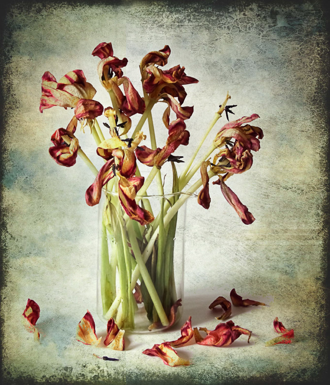 тюльпаны увядшие фото анимационные картинки