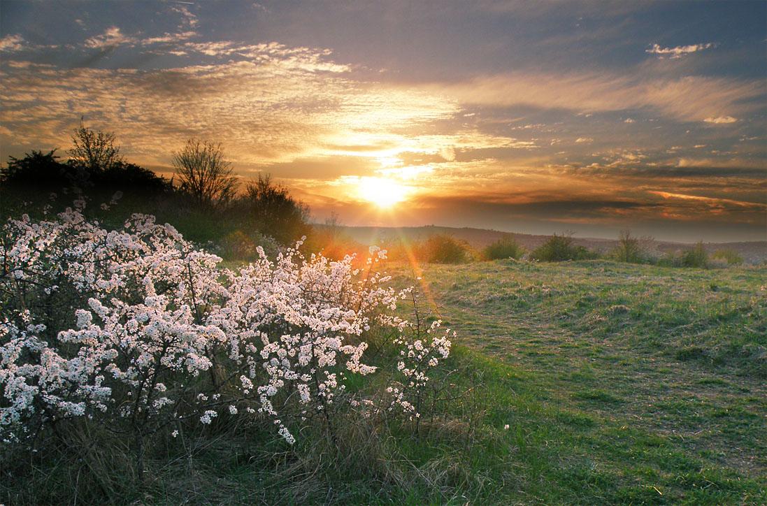 Картинки весна утро красота техники деграде