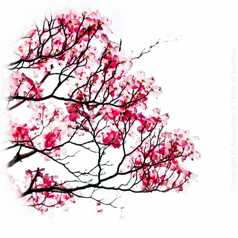 Рисунки японские цветы