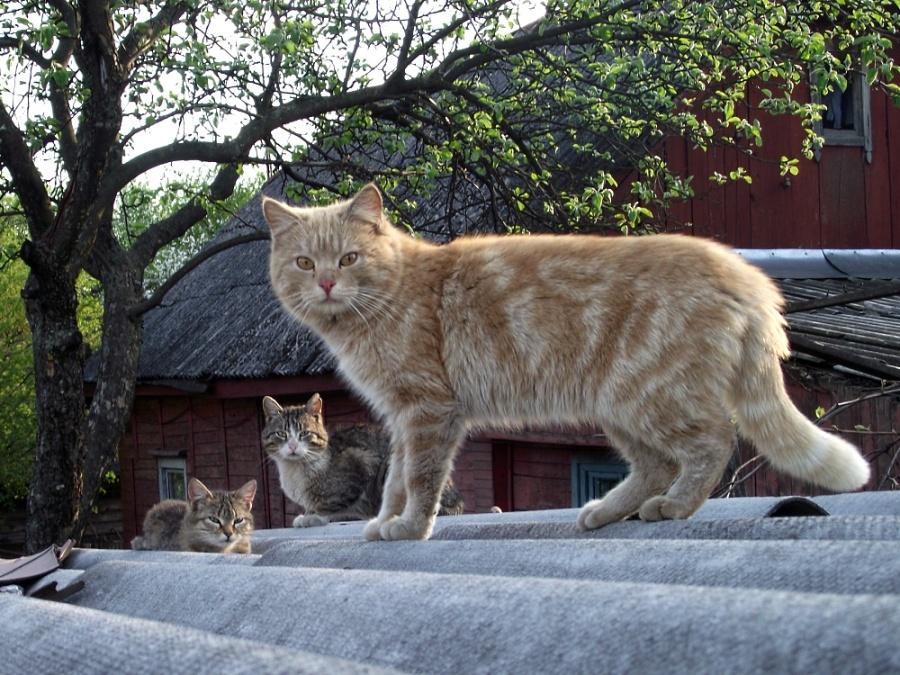 Киевские кошки могут спать спокойно где угодно