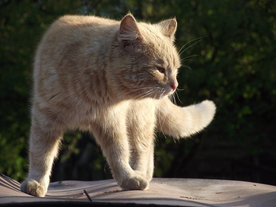 Кошка, которая отдыхала на крыше