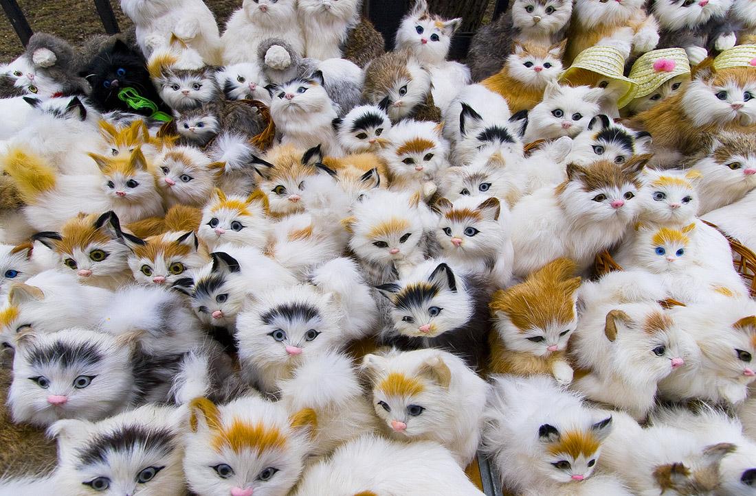 День, картинки много кошек