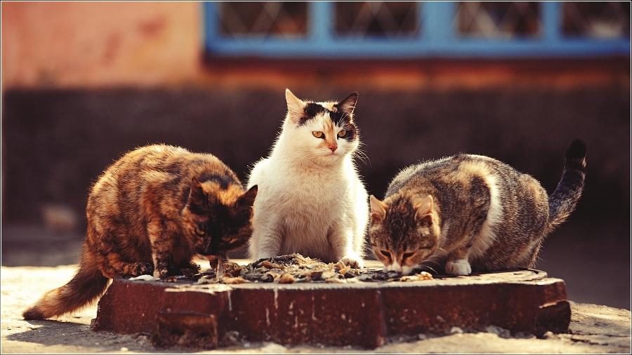 Эх, никогда вам ЛЕДЯМИ / котоматрица кошки / Смешные картинки, приколы