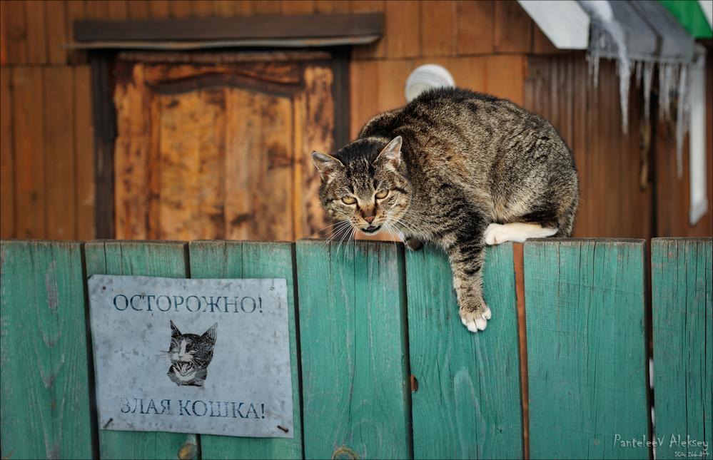 Коты для охраны
