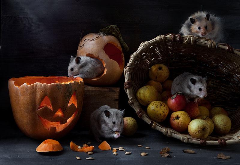 про любителей Хеллоуина